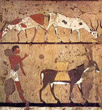Figura 1. Hombre con asno, 2200 A.C. Museo Egipcio de Turín.